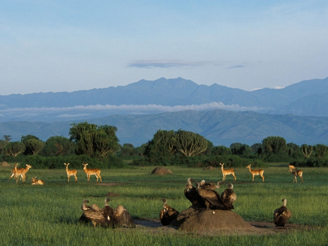 Uganda Highlights | Queen Elizabeth National Park