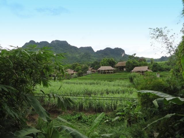 Vietnam, Rice Paddy Field