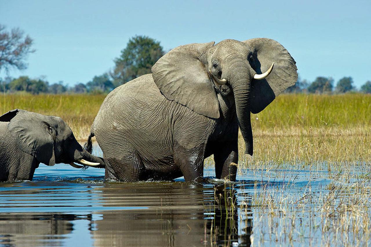 Botswana, Okavango Delta, Vumbura Camp