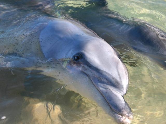 Western Australia, Monkey Mia Dolphins