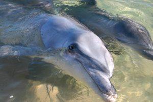 Monkey Mia Dolphins & West Coast | Dolphins, Monkey Mia, Coral Coast, Western Australia