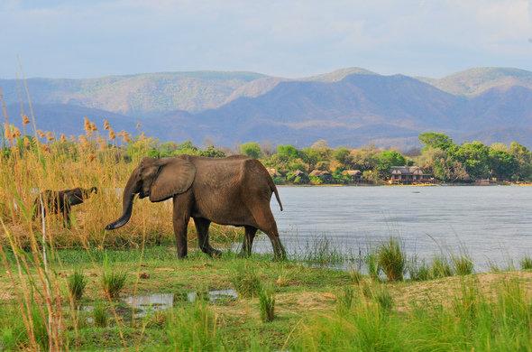 Zambia, Lower Zambezi National Park