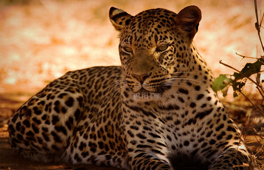 Discover Zambia, Lower Zambezi National Park