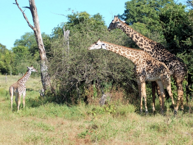 Discover Zambia, South Luangwa National Park
