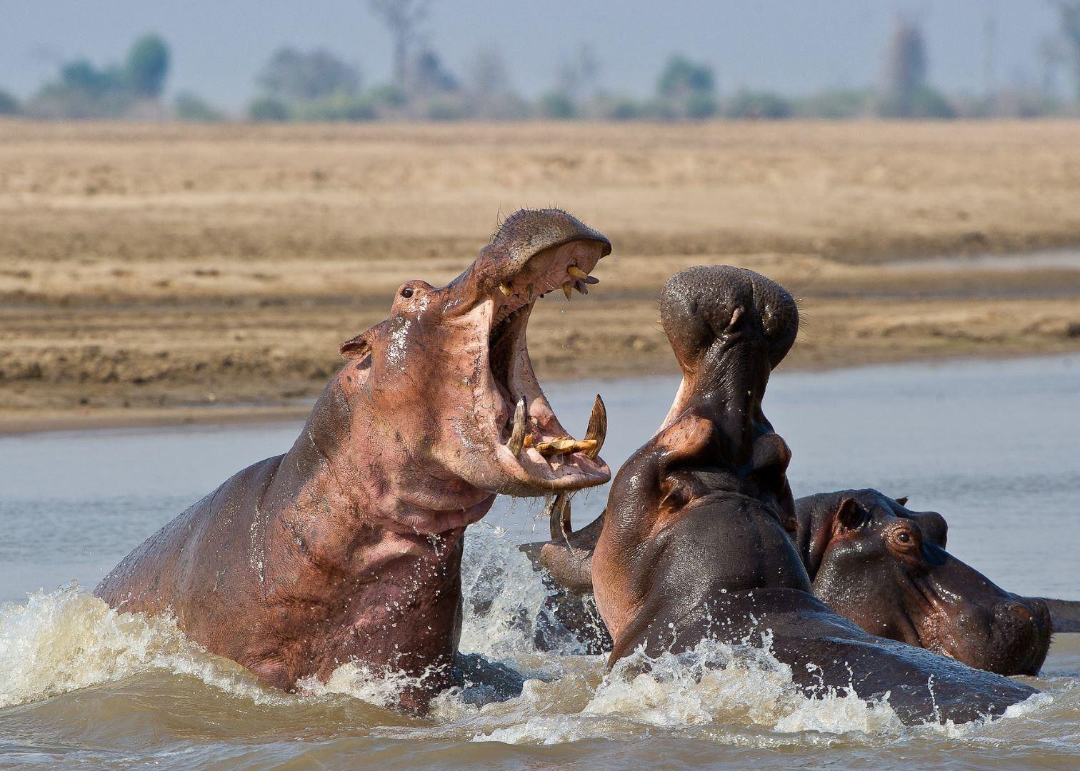 Elegant Zambia, South Luangwa National Park