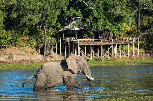 Zambia, South Luangwa National Park, Chindeni