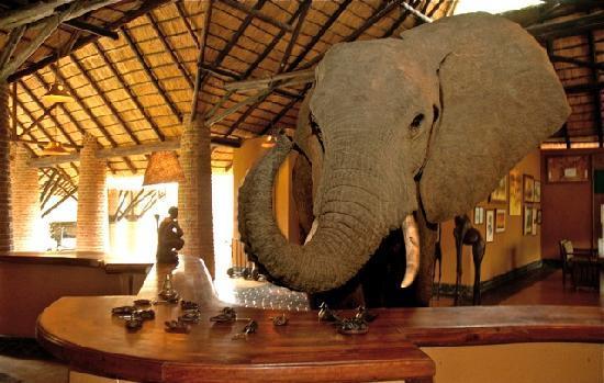 Zambia, South Luangwa National Park, Mfuwe Lodge