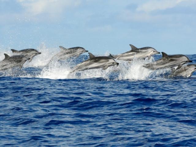 Zanzibar, Kizimkazi, Dolphins