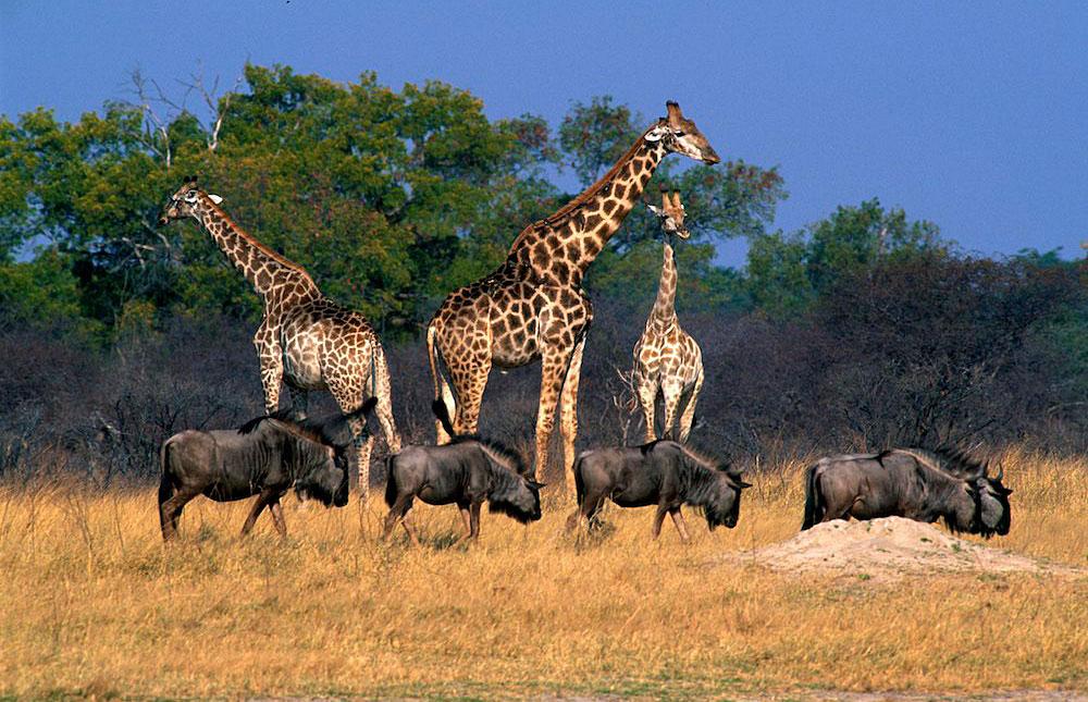 Zimbabwe, Hwange National Park