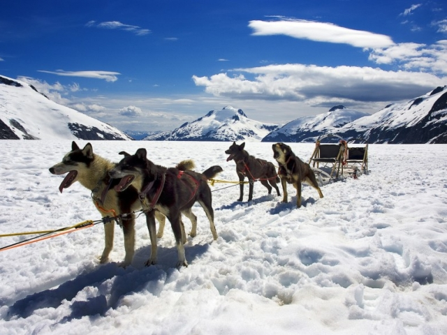 Alaska, Big Lake, Happy Trails Kennel