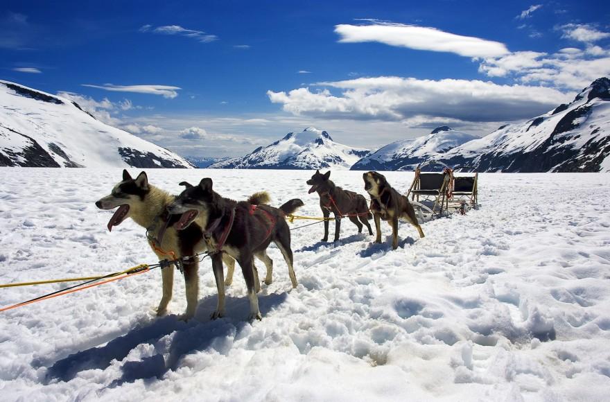Spectacular Alaska | Happy Trails Kennel, Big Lake, Alaska