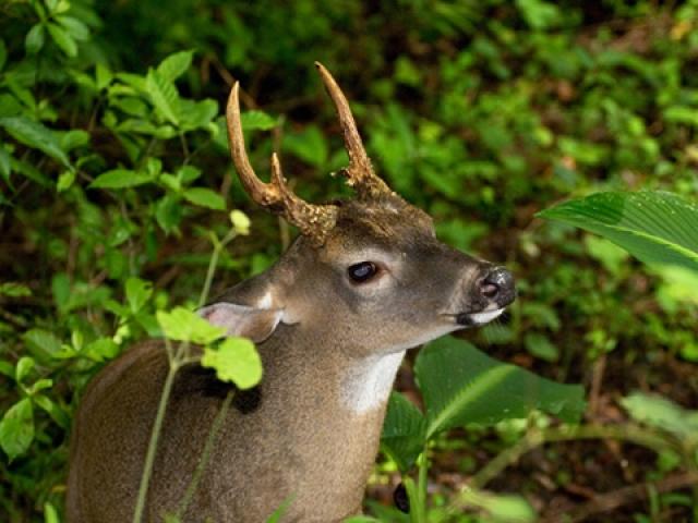 Arenal & Monteverde | Monteverde Cloud Forest Reserve, Costa Rica