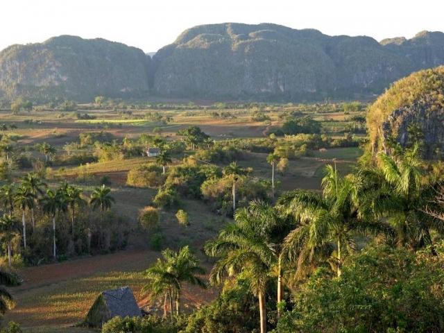 Cuba, Viñales Valley, Tobbaco Plantation