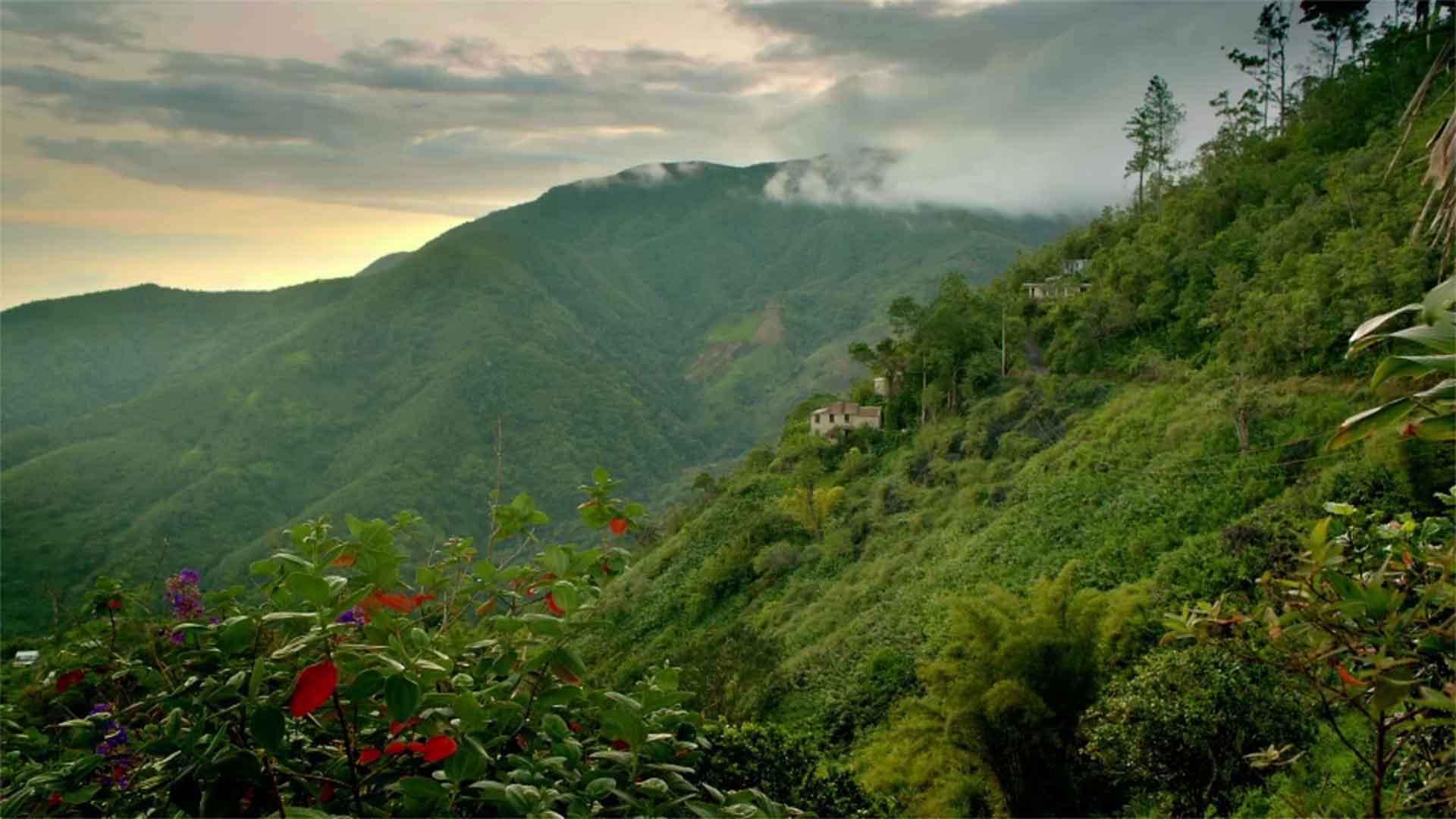 Jamaica, Blue Mountains
