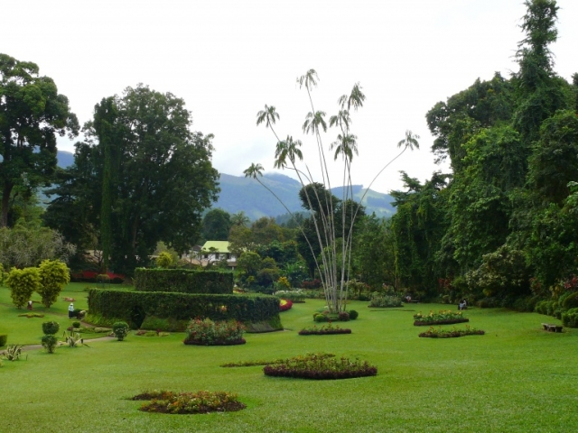 Sri Lanka, Peradeniya, Royal Botanical Garden