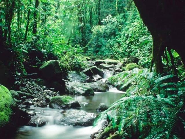 Darien Ethnic Expedition - Darien National Park