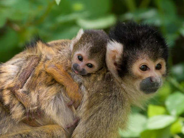 Natural Wonders of Costa Rica | Squirrel Monkeys