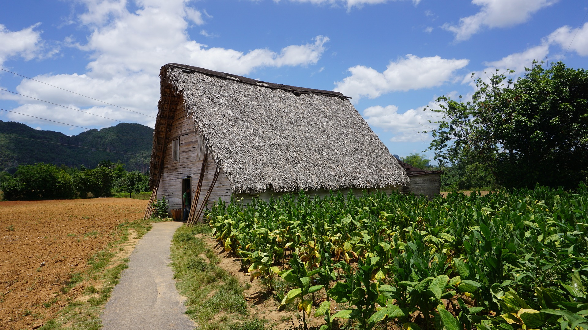 Cuban Rendezvous | Vinales Tobacco Plantations