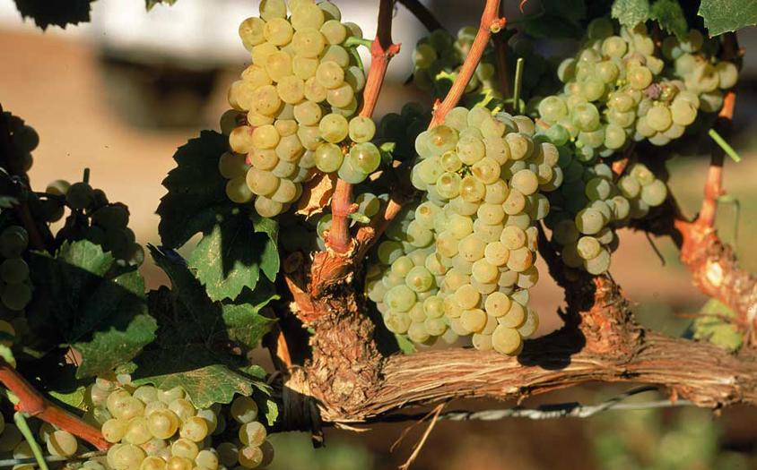Treasures of Argentina | Winery, Mendoza, Argentina