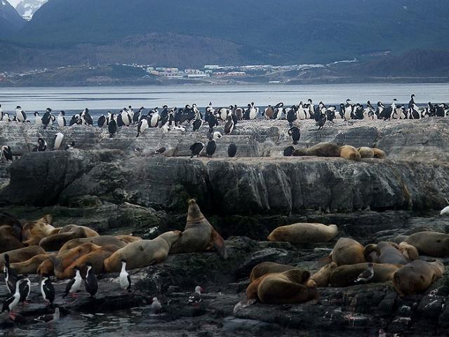 Argentina, Eclaireus Archipelago, Isla de Los Lobos (Seals' Island)
