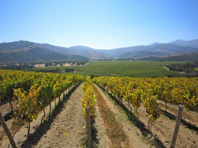 Chile, Rosario Valley, Matetic Vineyard