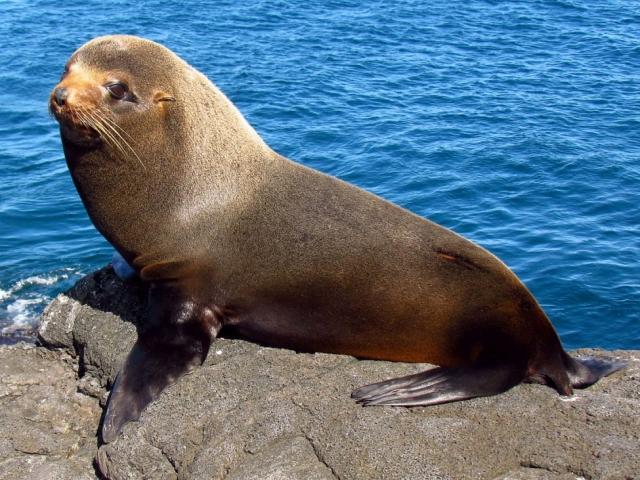 Galapagos Island Hopping | Galapagos fur seal, Galápagos Islands, Ecuador