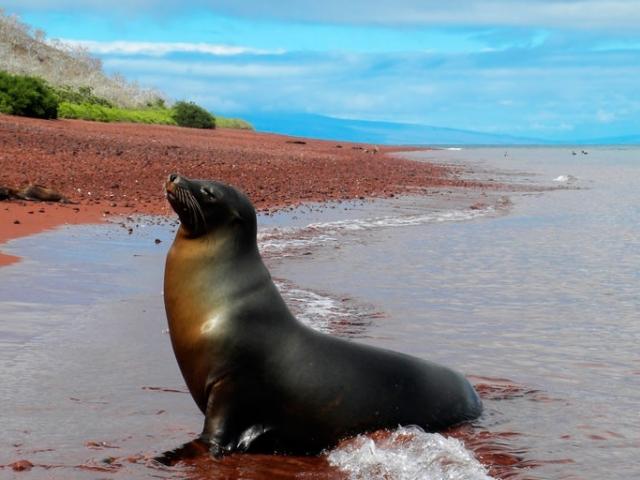 Ecuador, Galapagos Islands, Rabida Island