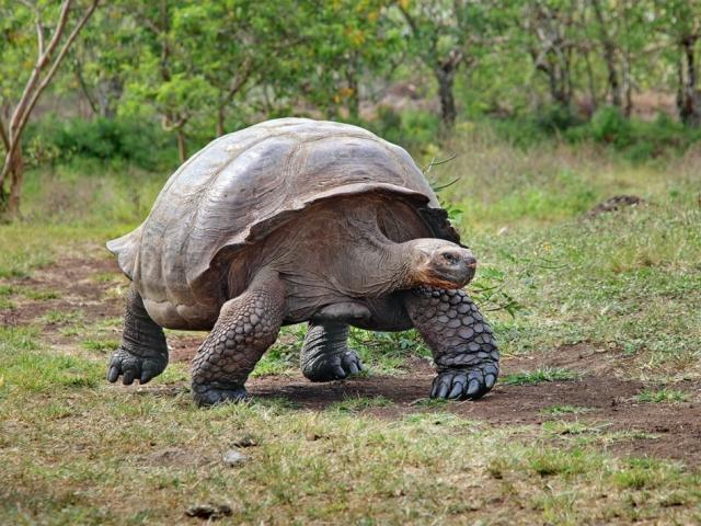 Galapagos Island Hopping | Giant Tortoise, Galapagos Islands, Ecuador