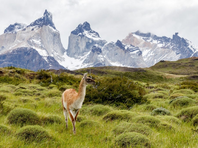 Wonders of Chile | Torres del Paine, Chile