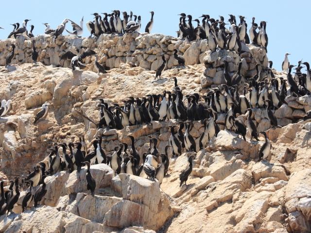 Peru, Ballestas Islands