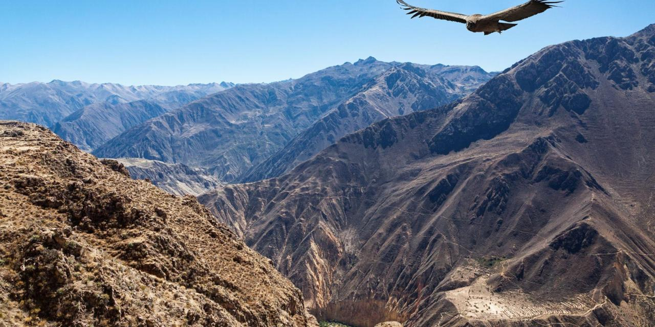 Epic Colca Canyon | Colca Canyon, Peru