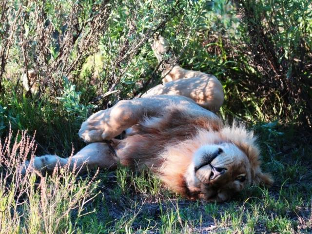 Chobe National Park & Okavango Delta, Elephant Valley Lodge game viewing