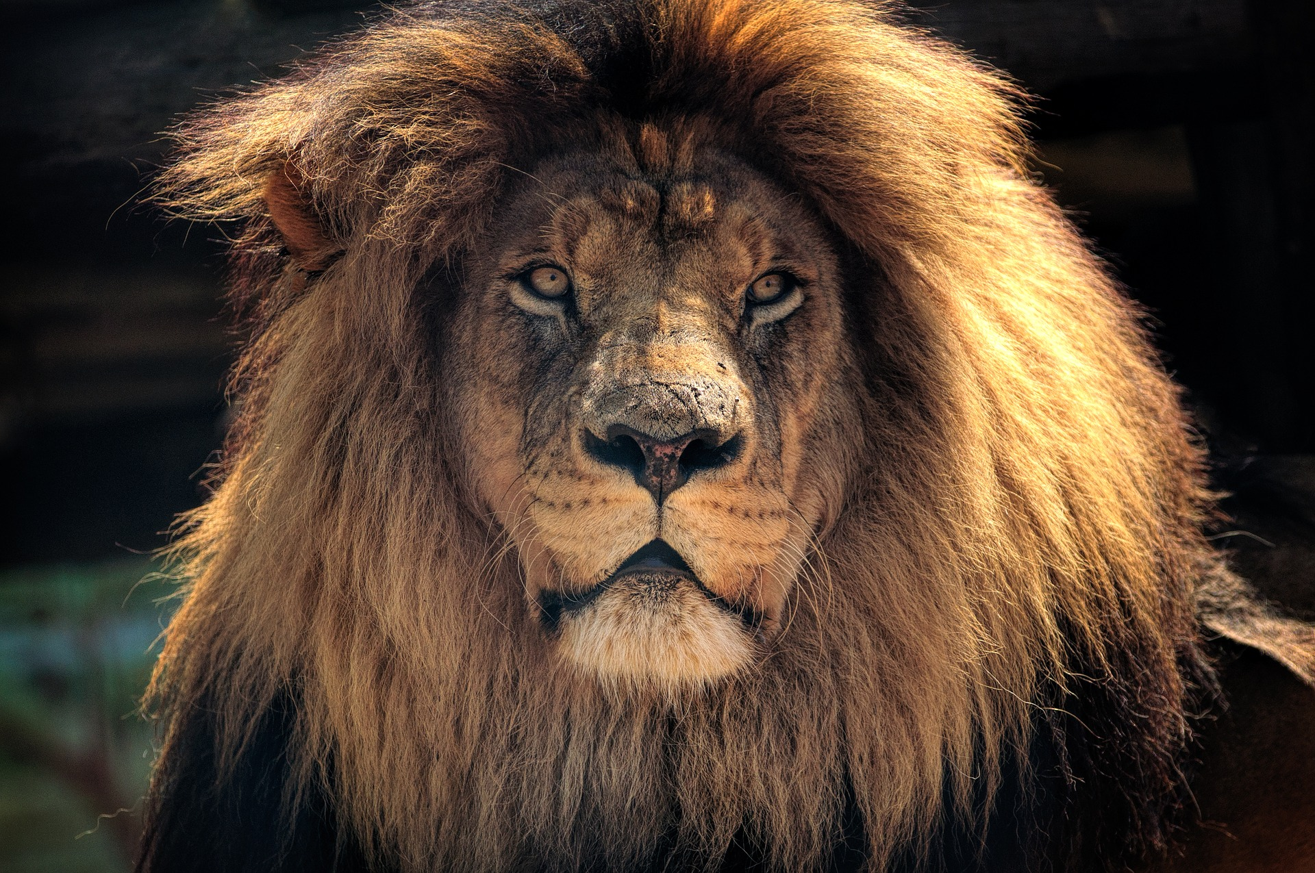 Wilds of Africa | Kruger National Park, South Africa