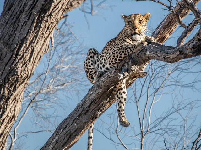 Chobe National Park & Okavango Delta, Pom Pom Camp game viewing