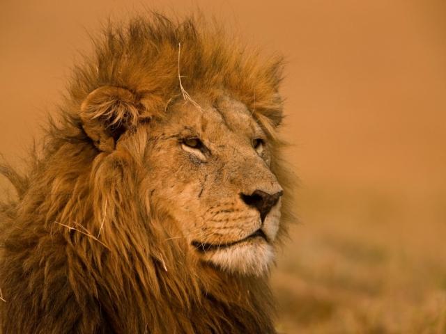 Delta to Desert - Game viewing, Linyanti Reserve, Botswana