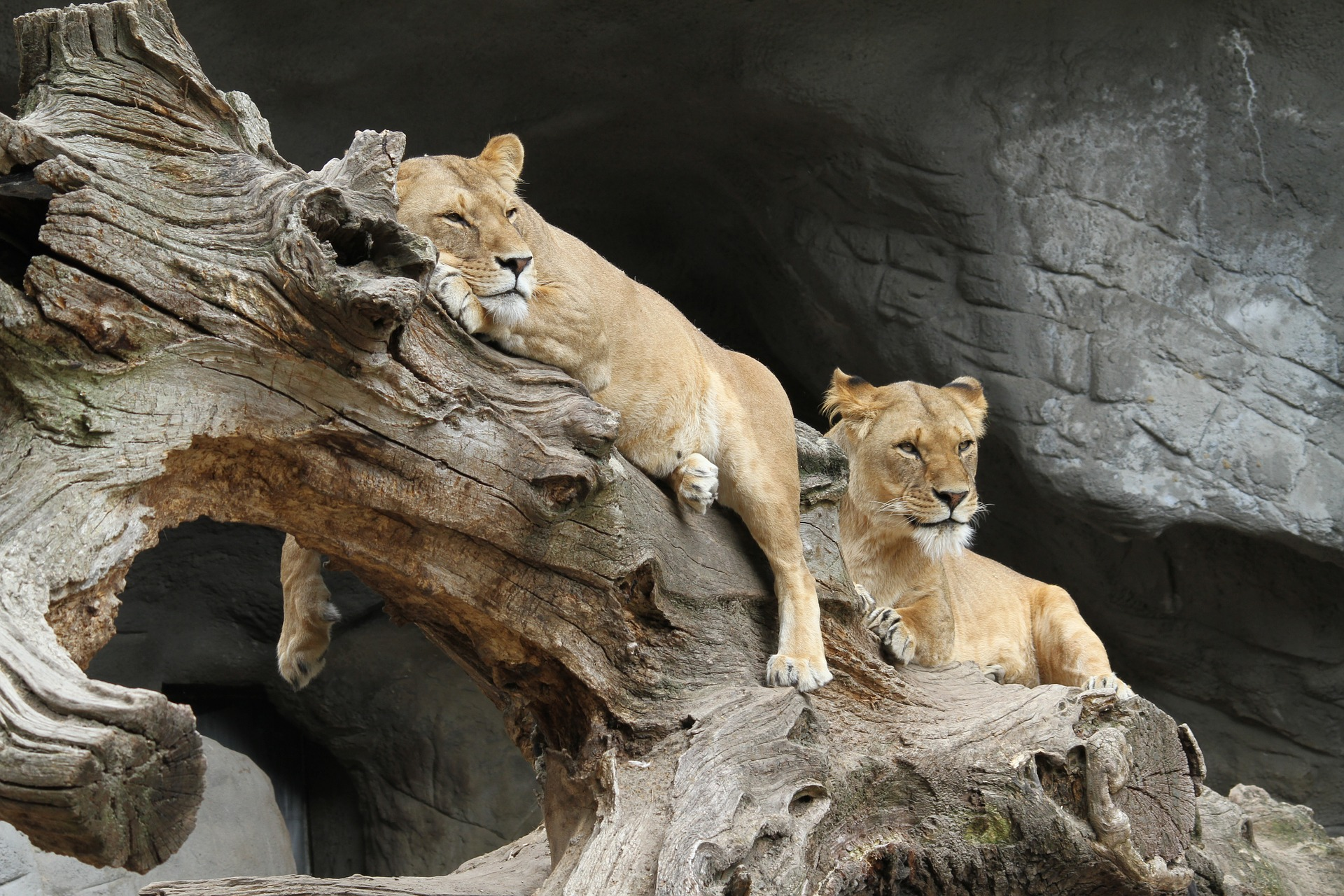 Wilds of Africa | Serengeti National Park, Tanzania