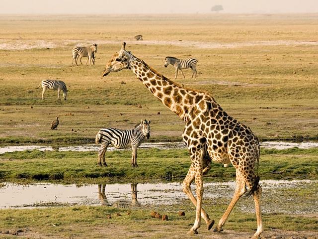 Great Game Parks, Safari