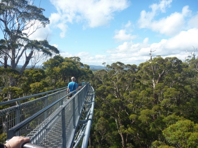 Margaret River, Tree Top & Albany, Valley of the Giants, Tree Top Walk