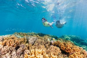 Tropical Reef & Rainforest | Great Barrier Reef, Queensland