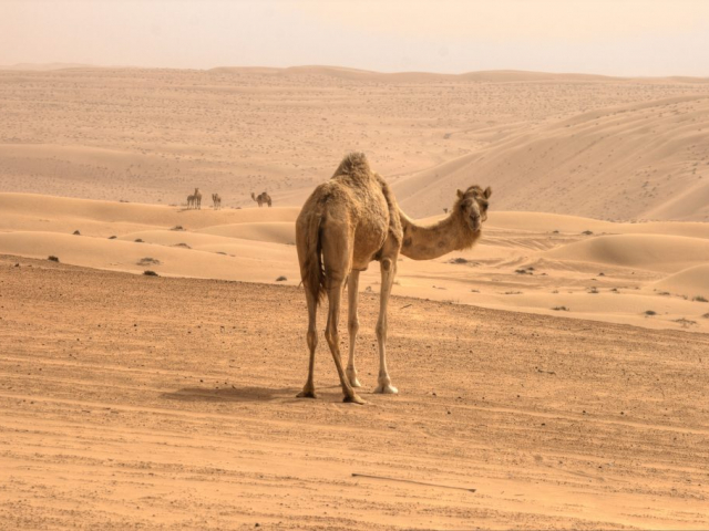 Arabian Nights | Wahiba Sands, Jordan