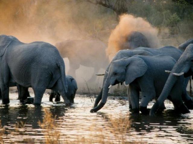 Classic Botswana, Chobe National Park