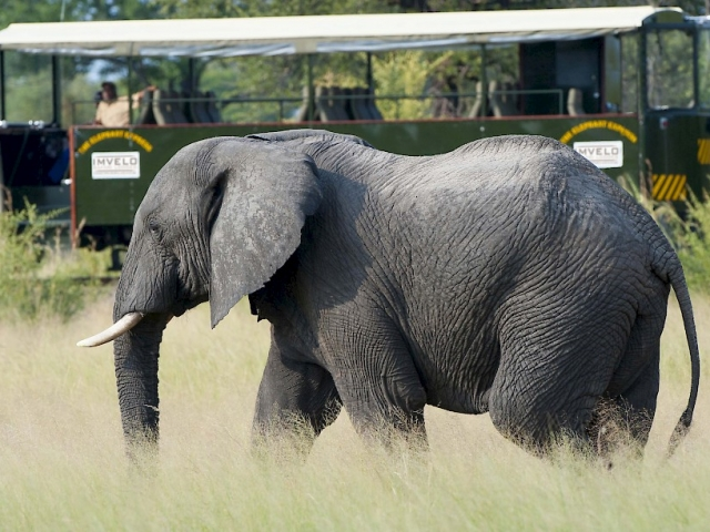 Zambezi River & Hwange Safari, Hwange National Park, Elephant Express