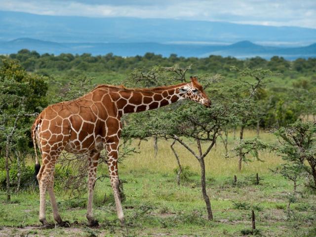 Kenya Safari in Style, Laikipia Plateau
