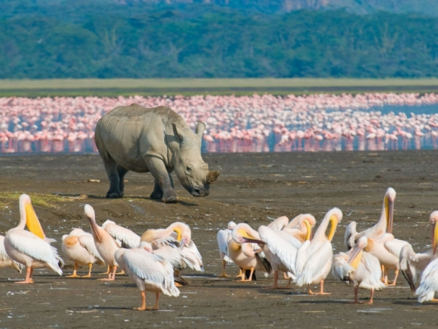 Kenyan Discovery | Lake Nakuru National Park
