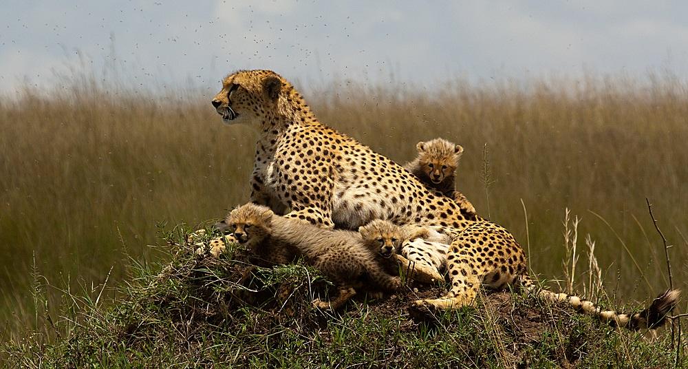 Visions of Kenya - Masai Mara National Reserve