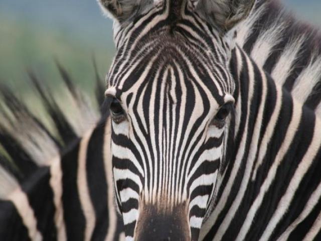 Classic Botswana, Moremi Game Reserve