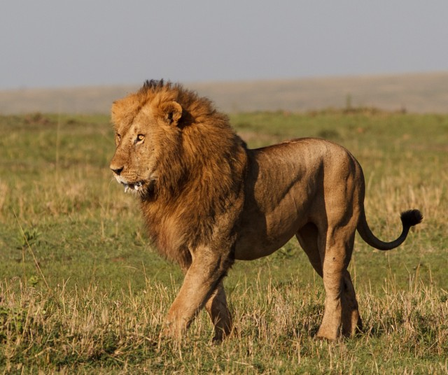 Tanzania Under Canvas, Ngorongoro Conservation Area