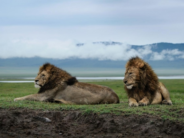 Tanzania Under Canvas Safari - Ngorongoro Crater