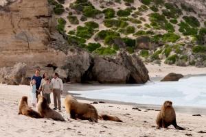 Kangaroo Island Discovery | Seal Bay, Kangaroo Island, South Australia