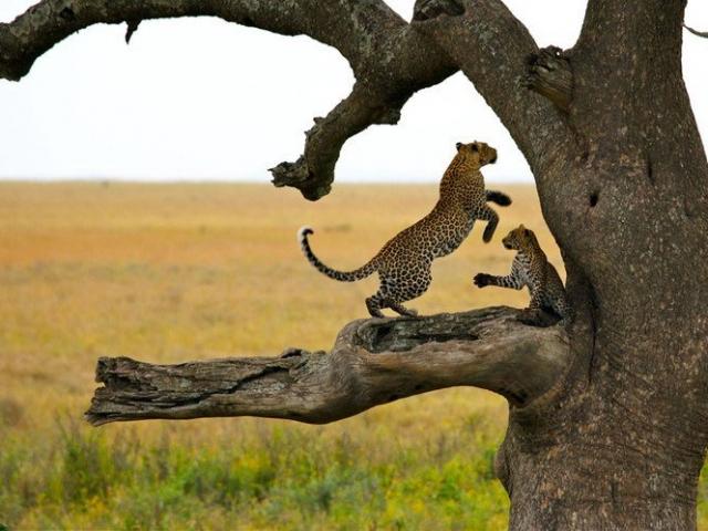 Tanzania Under Canvas, Serengeti National Park